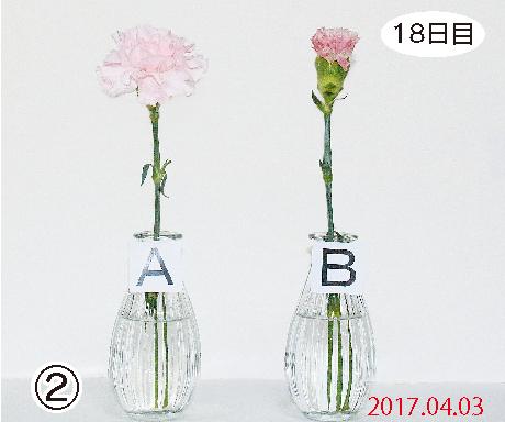 カーネーション18日目